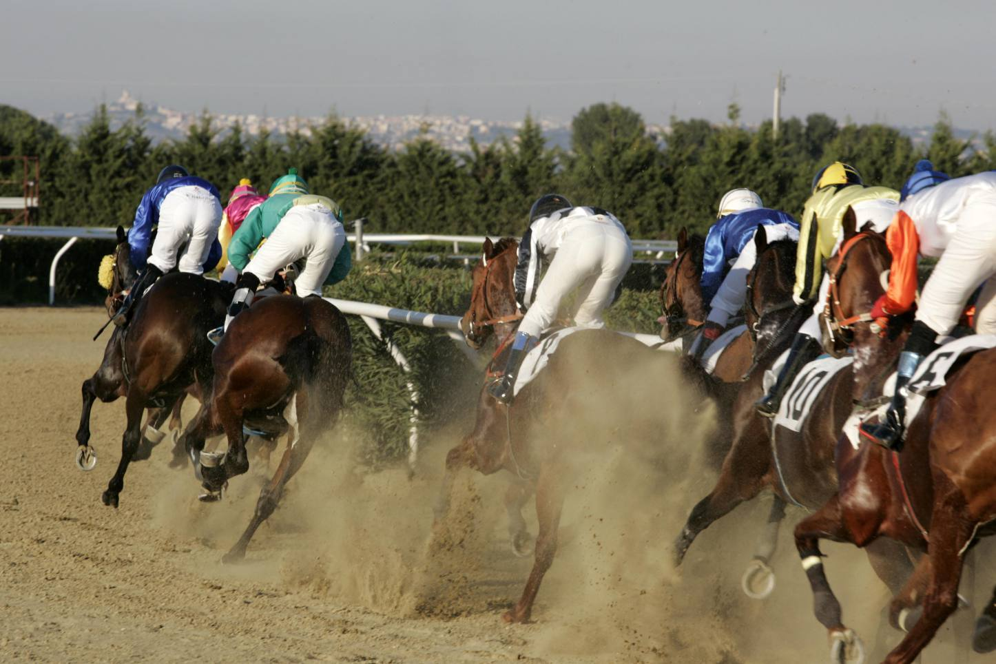 Ippica, Ippodromo del Mediterraneo: tra i giovanissimi spicca Magica Grazia